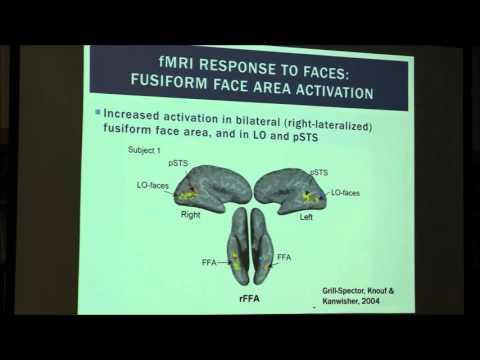 Elizabeth Norton, Ph.D. Using simultaneous EEG-fMRI ...