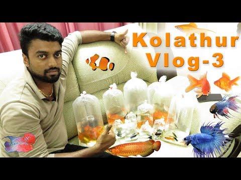 Kolathur Ornamental Fish And Pet Market Vlog 3
