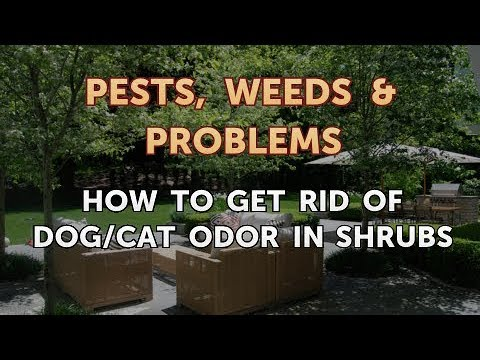 How To Get Rid Of Dog/Cat Odor In Shrubs