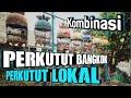 Suara Perkutut Bangkok Dan Lokal Saling Bersahutan Ampuh Untuk Pancingan Perkutut Malas Bunyi  Mp3 - Mp4 Download