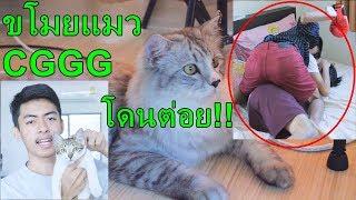 เมื่อ UDiE ขโมยแมว CGGG หัวร้อนจัด!! [VLOG]