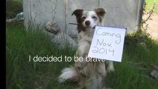 Dog Training Using Recaller Games Is A Promise Kept