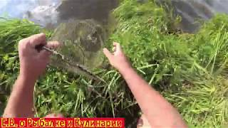 Ловим карася летом удочками СССР на озере Воспоминания о летней рыбалке и карасях скорей бы лето