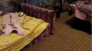 Банда немецких догов атакуют! Продам щенков немецкого дога(Гром гремит, земля трясется - банда дожиков несется ! :) Продам щенков немецкого дога!, 2013-02-25T20:10:51.000Z)