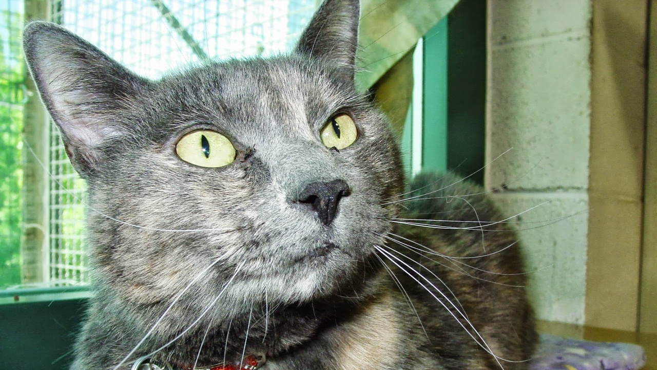 Cat Care Soceity Kitten Cam