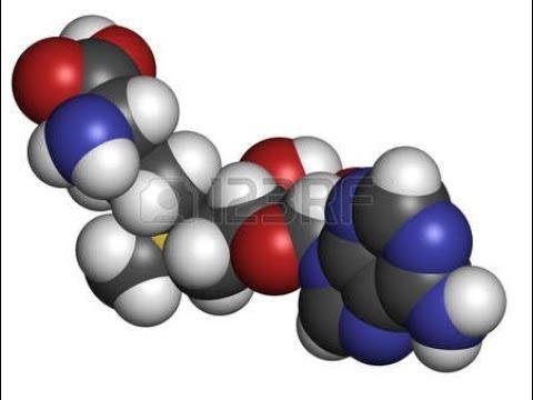 sam-e-|-detox,-cell-growth-&-repair,-brain,-liver,-phospholipids,-hormones,-mood,-neurotransmitters