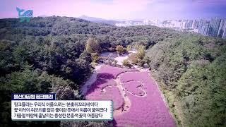 [지오그래픽]울산대공원 핑크뮬리