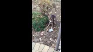 はしゃいで庭を走り回っていたところ、レンガに足をぶつけて急にしょん...