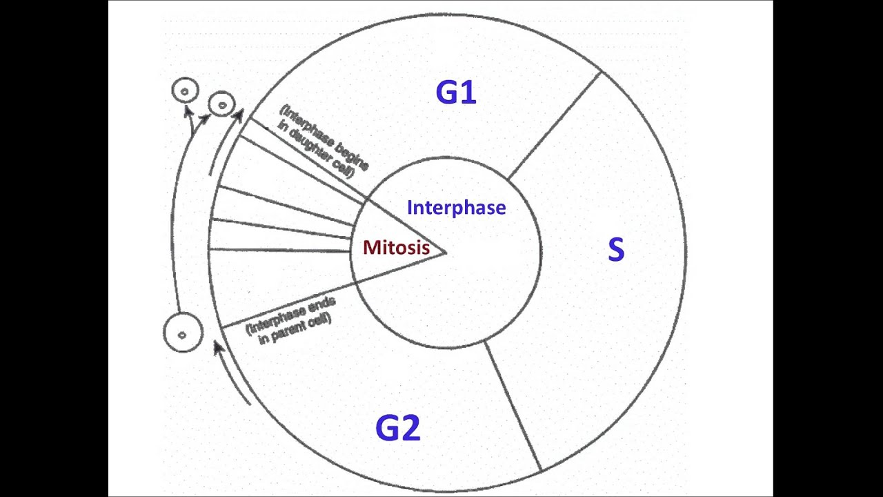 Cell Diagram Showing