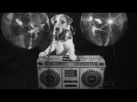 moron-police-–-the-dog-song-(official-music-video-w/lyrics)