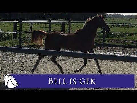Bell heeft de wind in haar kop