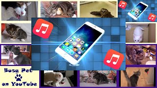 Cats Meowing IPHONE RINGTONE (MARIMBA) (Acapella)