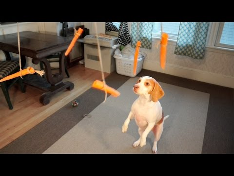 Dog Having Fun With Flying Carrots Merry-Go-Round