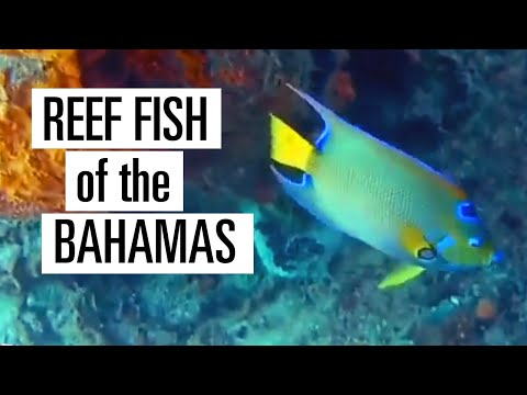 Learn To Identify Fish In The Bahamas