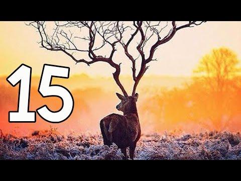 15 สัตว์ป่าสงวนของไทย ที่แม้แต่คนไทยเอง......ก็อาจจะลืมไปแล้ว T_T