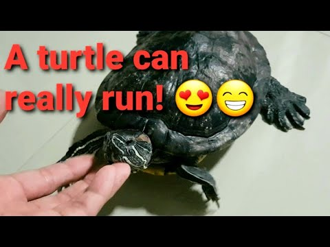 Our Pet Turtle Youtube