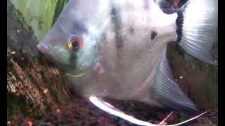 Fish Movie trailer!  // Zwiastun rybnego filmu