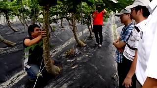 видео: Что выращивают в теплицах Китая What are grown in greenhouses in China