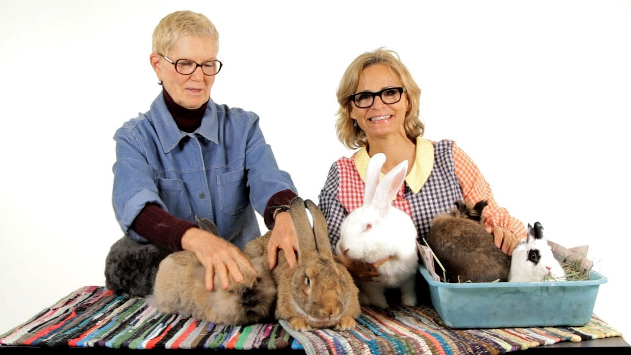 Which Rabbit Breed Is Best Pet Rabbits Youtube