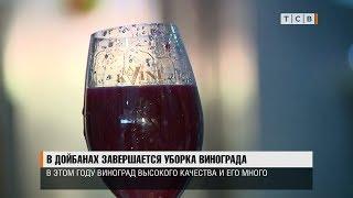 В Дойбанах завершается уборка винограда