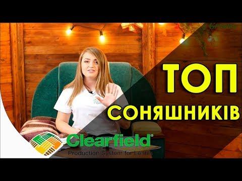 Топ 5 гібридів соняшника під Clearfield 2019