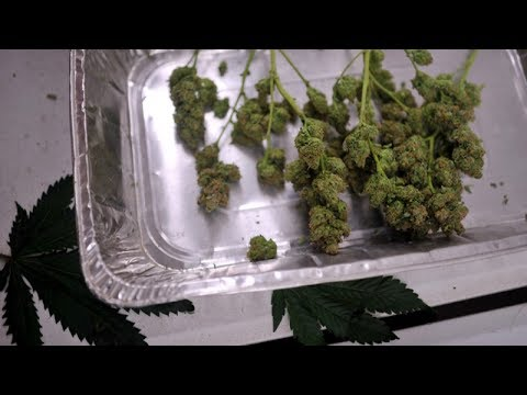 She owns a marijuana shop; He's a pot baron   The Cannabist Show