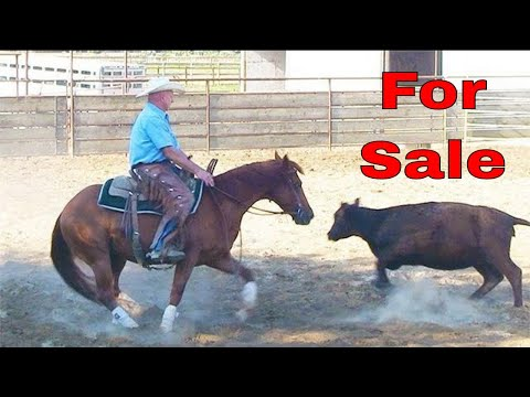Ranch Cutting or Ranch Sorting Horse For Sale