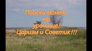 Поиски в жару по высокой траве на урочище.../searches in the heat of the tall grass on the tract...