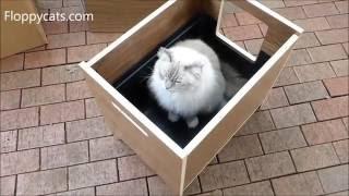 CURIO® Modern Cat Furniture Unboxing Video - CurioCraft Litter Box Cover Pet Hideaway - Floppycats