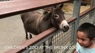Children's Zoo at the Bronx Zoo