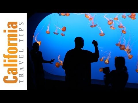 Monterey Bay Aquarium - Monterey Attractions