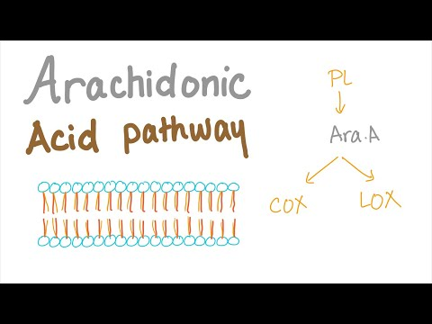 Arachidonic Acid Pathway...Best Explanation!