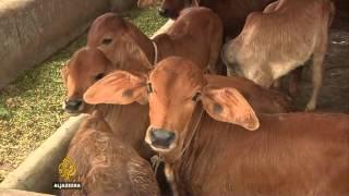 ماذا تعرف عن الألبان واللحوم النباتية؟ - ساسة بوست