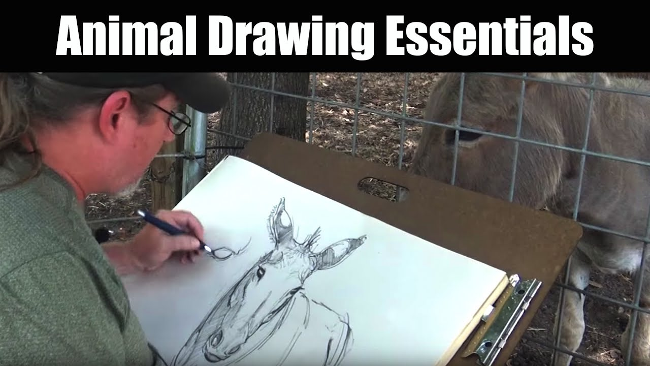 Drawing - Animal Drawing Essentials