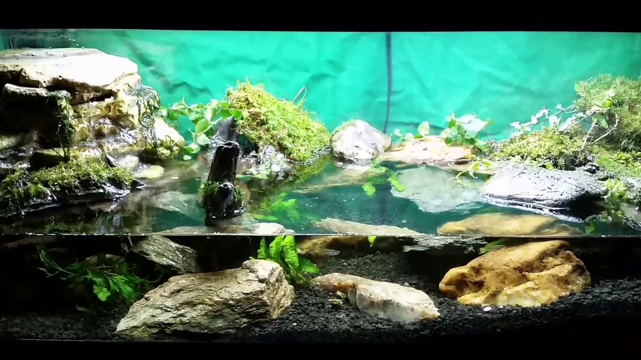 Red Clawed Mangrove Crab Tank
