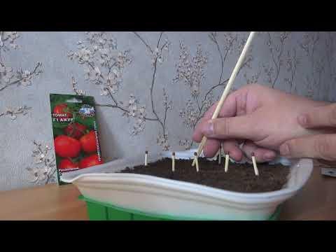 Сеем семена томатов МАЗАРИНИ и АЖУР F1