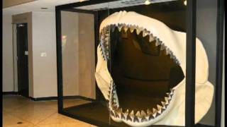 Megalodon Jaws (Huge)