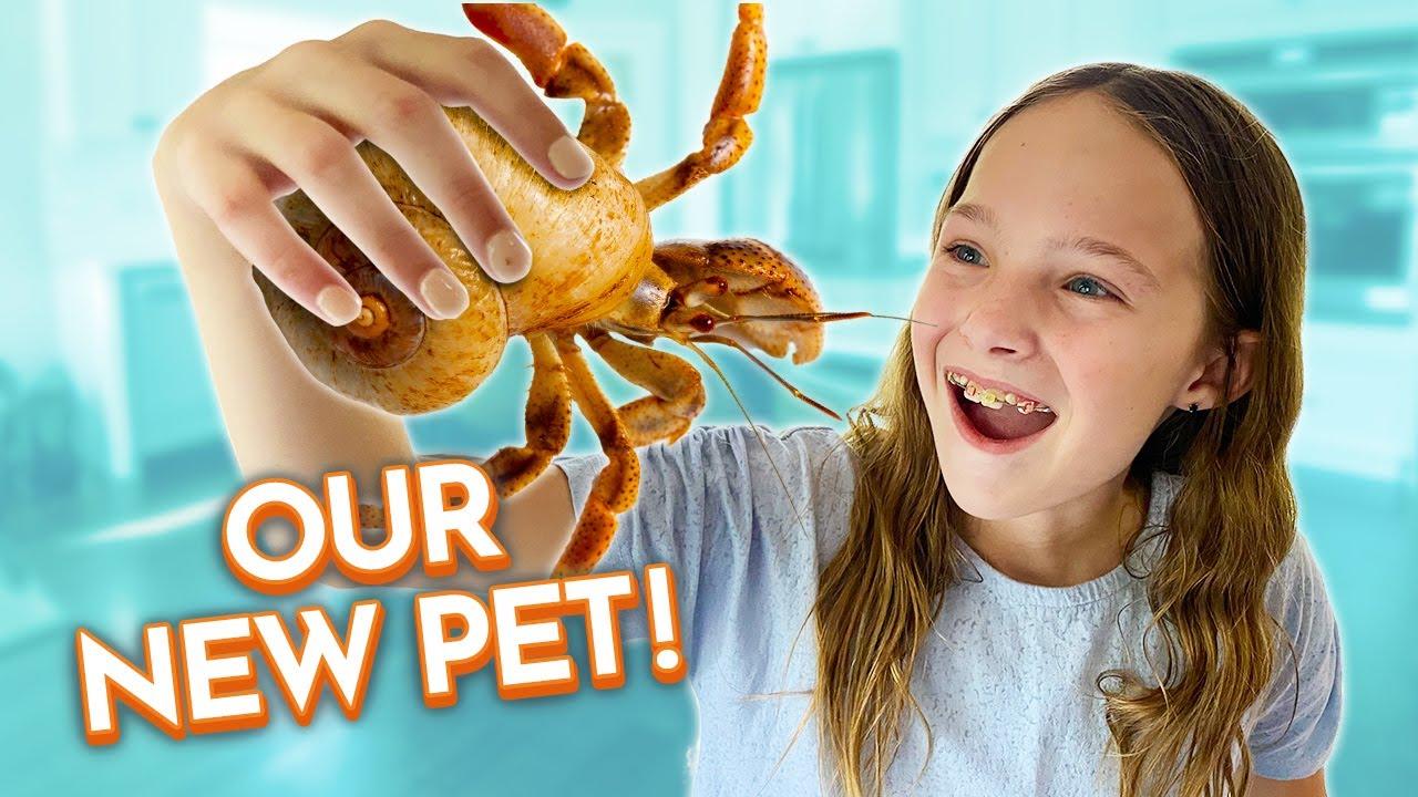 Download We Bought Hermit Crabs!