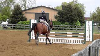 Maverick - Mini Open Equitation