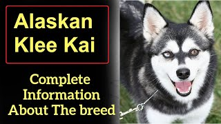 Alaskan Klee Kai. Pros and Cons, Price, How to choose, Facts, Care, History