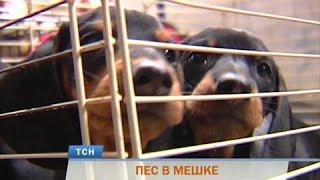 В Перми аферисты делают бизнес на бездомных животных