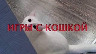 Играем с кошкой. Приколы с кошкой. Зефирка на охоте