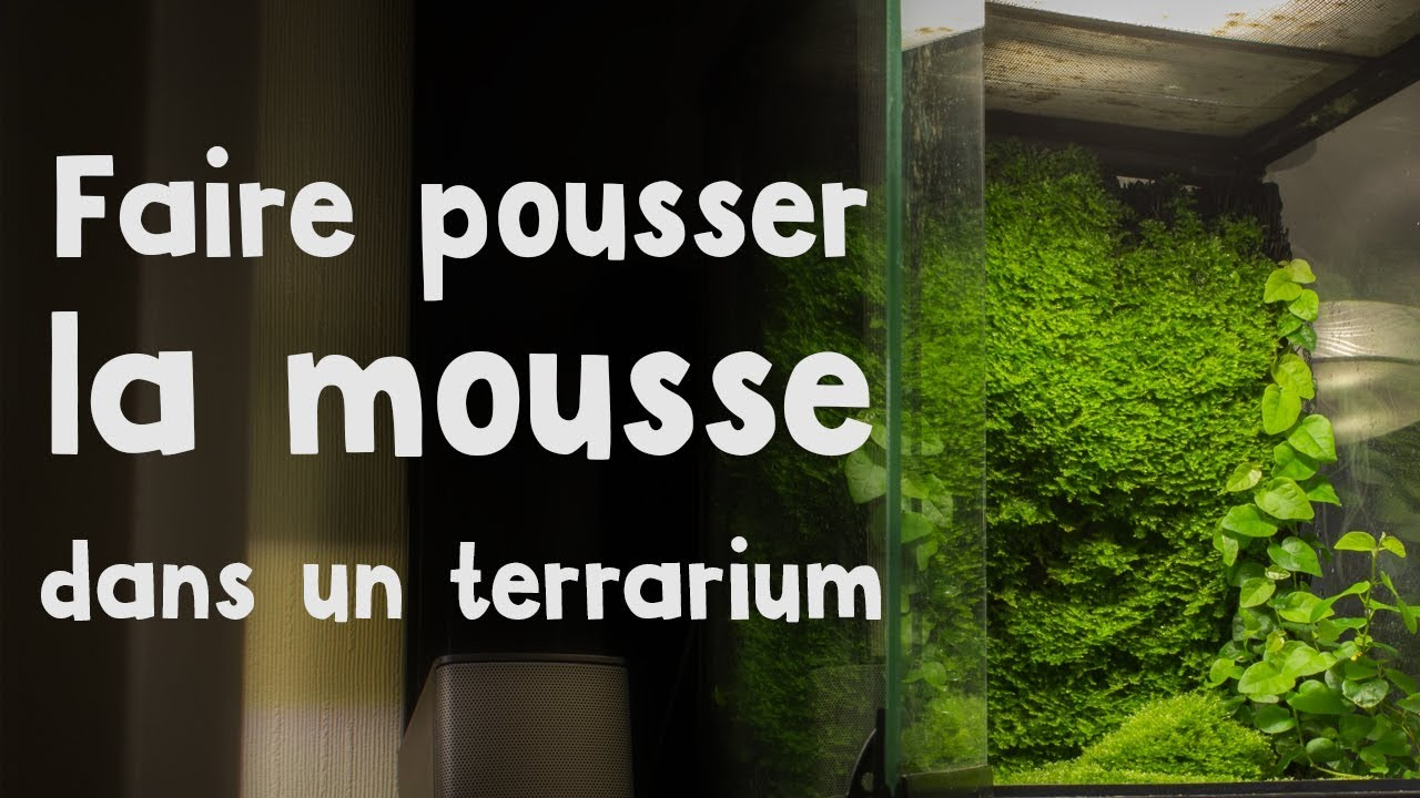 comment faire pousser de la mousse en terrarium youtube. Black Bedroom Furniture Sets. Home Design Ideas