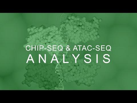 ChIP Seq ATAC