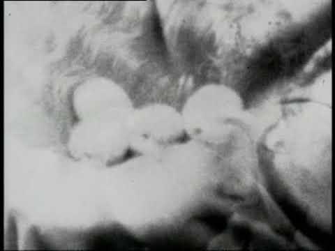 Stolen Apples for Karen Blixen, Derek Jarman, 1973