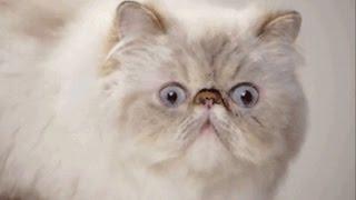 Видео о смешных животных. Для детей.Самые смешные животные.  Прикольные животные.