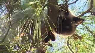 Cat In Tree Rescued By The Montgomery County, TX Fire Department