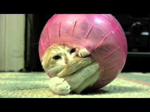 Funny Cat In Hamster Ball
