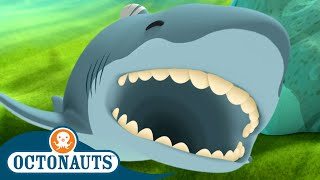 Octonauts - Great White Shark & The Coconut Crabs | Compilation | Cartoons for Kids