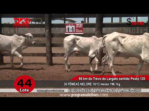 LOTE R44